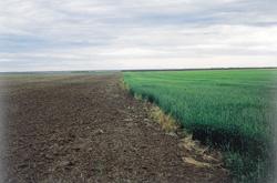 Soil top crop manager for Soil zones saskatchewan