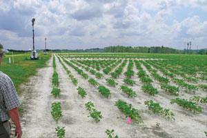 ETCM-10-20--Ontario-soybean-trials--under-lights--P1030927