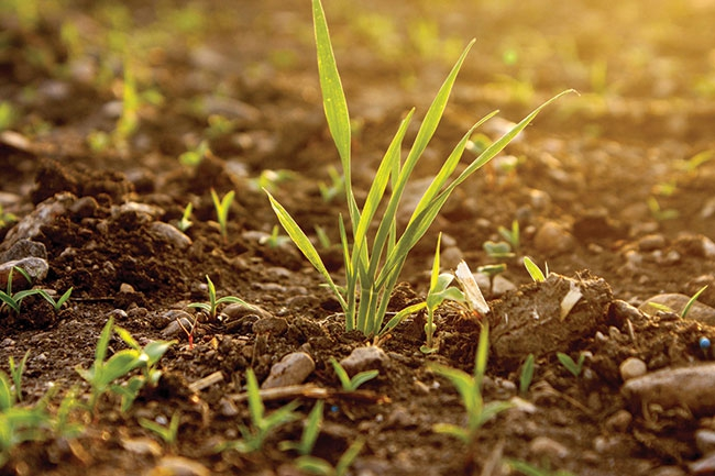 Searching for drought-tolerant wheat - Top Crop Manager