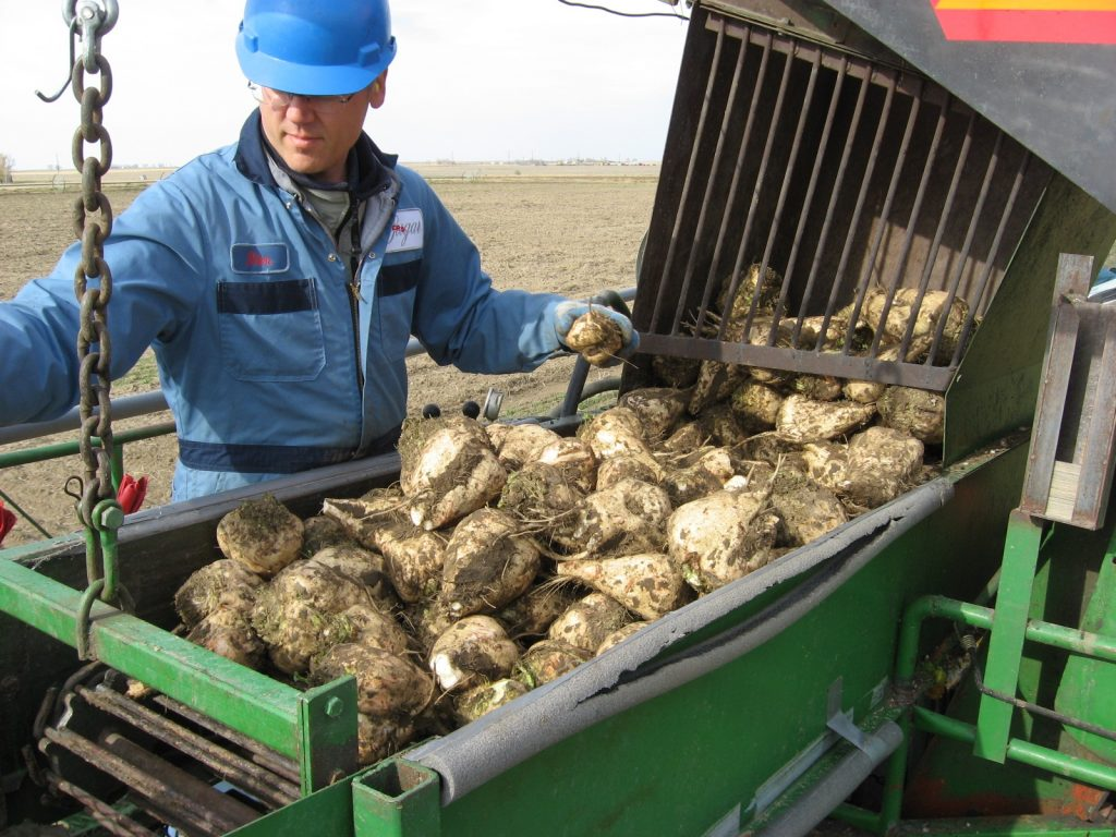 Sugar beets and soil conservation - Top Crop Manager