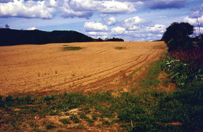 p5_New_Brunswick_field