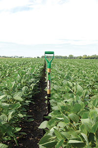 pg50_WTCM26-1-soybean-field-DL