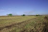 winterwheat2