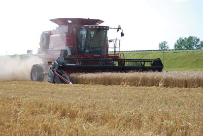 winterwheat3