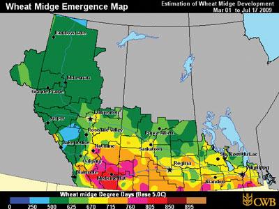 wtcm-10-6--wheatmidge-2009-07-17