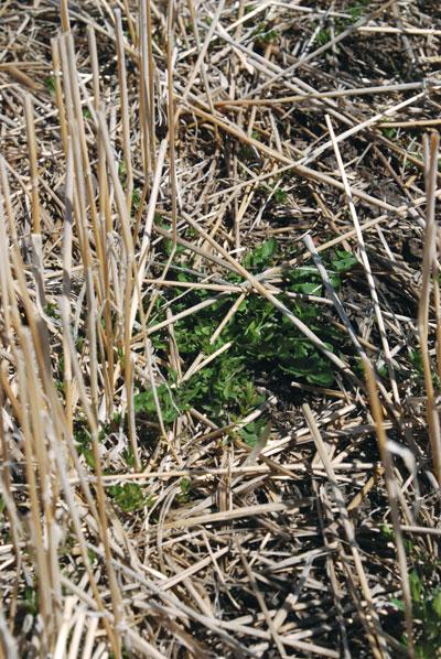 wtcm-11-14--2010-rosettes
