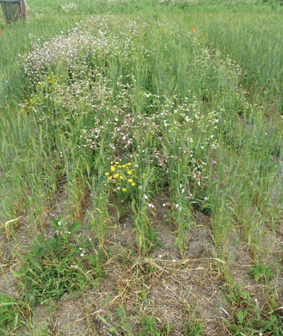 wtcm-11-18--pa-no-incrop-herbicde