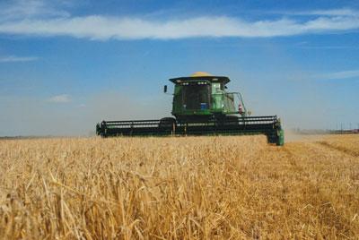 wtcm-13-39--combining-barley--