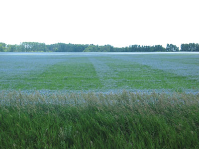 wtcm-16-16--flax-phos-and-vam
