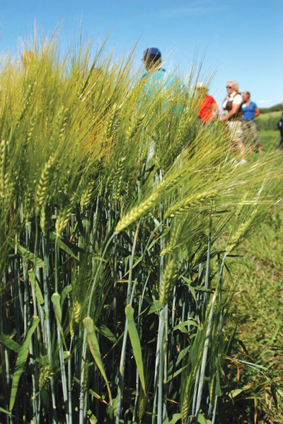 wtcm-6-5--2010-barley-plot